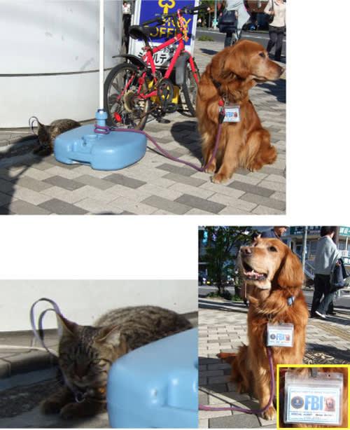 犬と猫が客引き(看板番外編)